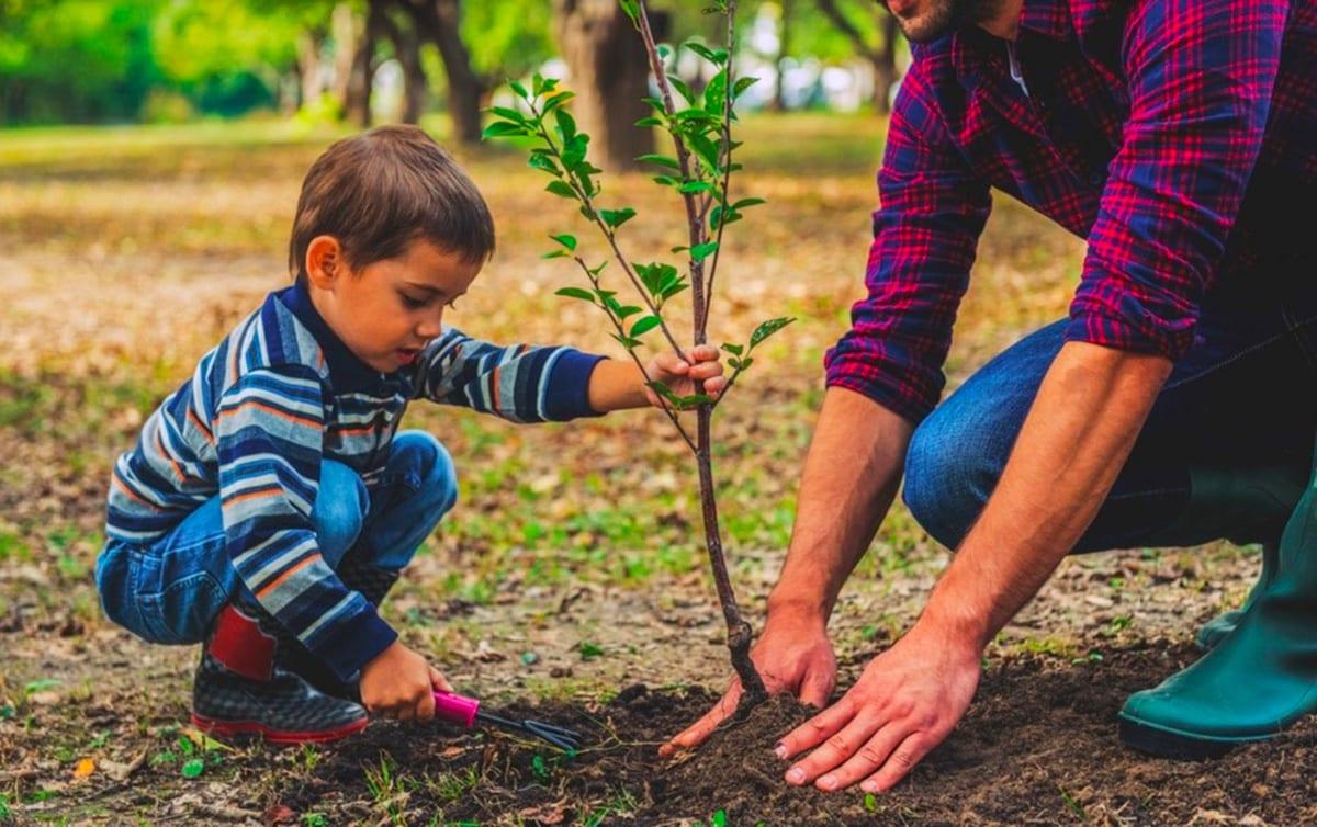 Att tänka på vid plantering av äppelträd för ekologisk odling