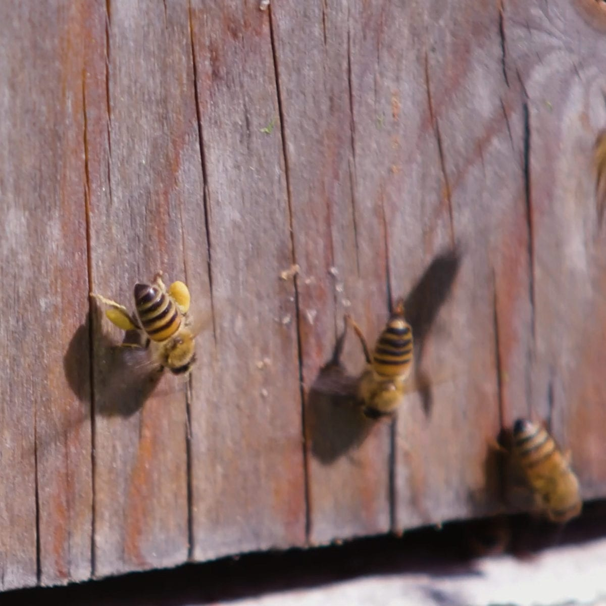 om pollinering i ekologisk biodling