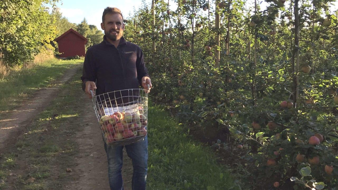 Skepparslöv lundmark ekologiska äpplets dag