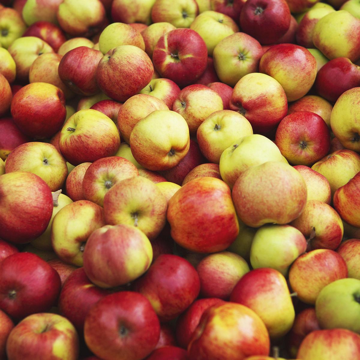 äpple juleboda gård fotograf anki blomqvist