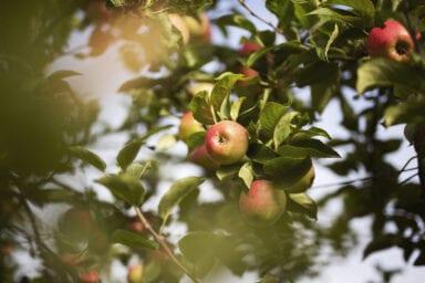 Framtidens Frukt 3 Foto Anki Blomqvist